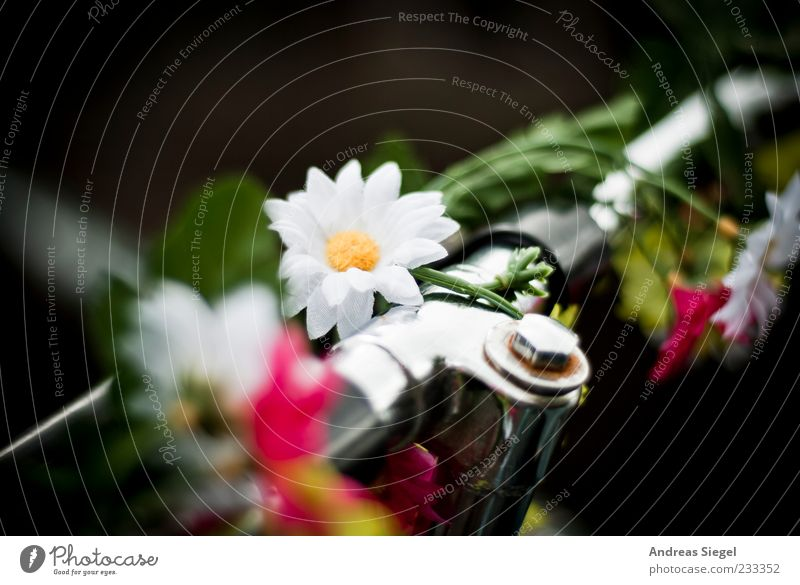 Beautiful Flower Blossom Bicycle Exceptional Happiness Decoration Uniqueness Positive Original Bicycle handlebars