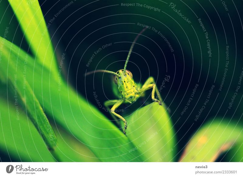 Smiling grass rump Environment Nature Plant Animal Grass Leaf Foliage plant Agricultural crop Wild animal Beetle 1 Exceptional Friendliness Happiness Happy