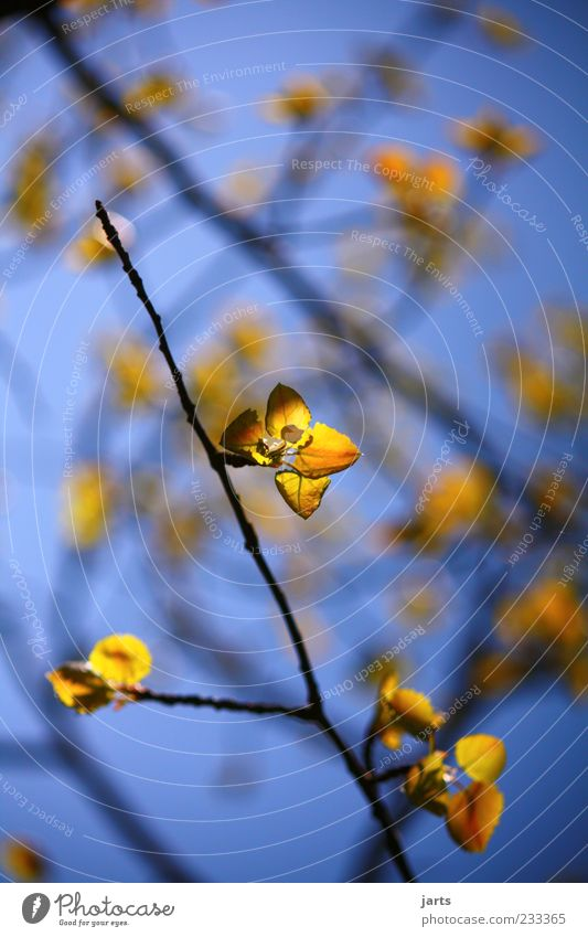 Golden times Nature Spring Beautiful weather Leaf Fresh Glittering Natural Blue Yellow Colour photo Exterior shot Deserted Copy Space top Day