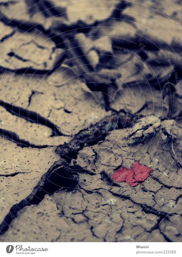 Red Brown Earth Dirty Heart Ground Symbols and metaphors Dry Environmental protection Drought Love of nature Heart-shaped