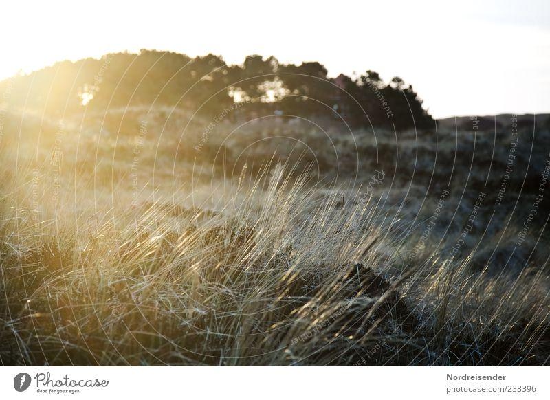 Nature Plant Sun Loneliness Meadow Landscape Grass Coast Moody Glittering Climate Bushes Idyll Beautiful weather Dune Joie de vivre (Vitality)