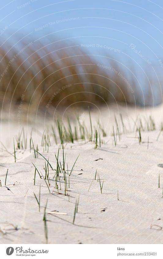Sky Nature Blue Beach Environment Sand Beach dune Blur Marram grass