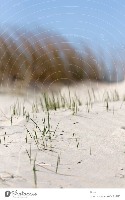 Sky Nature Blue Beach Environment Sand Beach dune Blur Marram grass