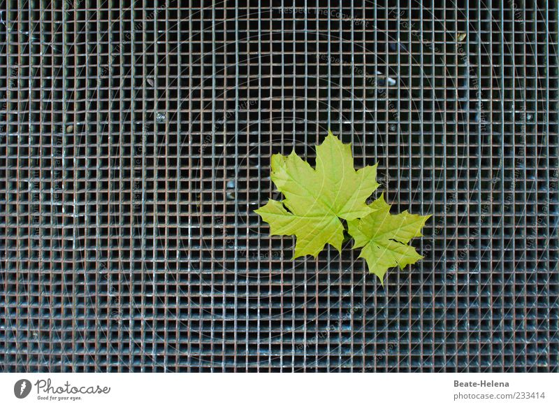 In search of the roots Calm Nature Plant Leaf Steel Line Touch Hang Exceptional Strong Gray Green Moody Power Hope Captured In pairs Metal grid Search