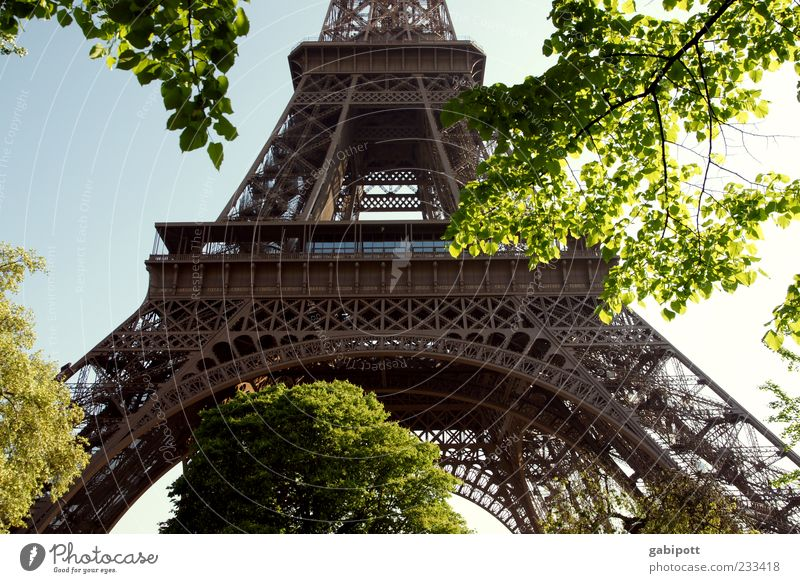 steel truss tower Paris Tower Manmade structures Building Architecture Tourist Attraction Landmark Eiffel Tower Famousness Fantastic Steel carrier Leaf Tree