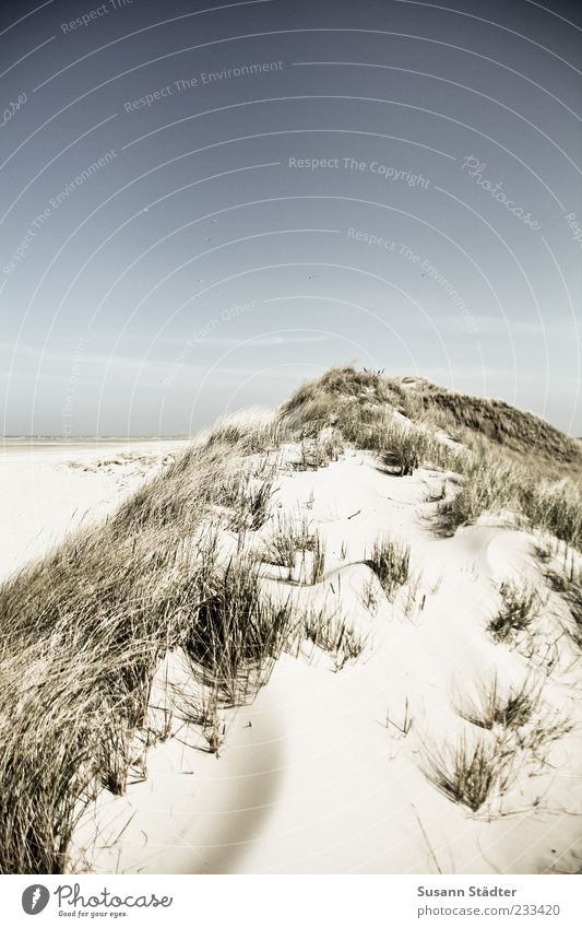 Vacation & Travel Ocean Relaxation Landscape Island Desert North Sea Beautiful weather Beach dune Dune Spiekeroog Cloudless sky Marram grass