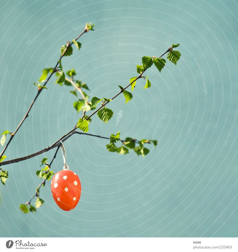 Mature egg cell Easter Hang Happiness Kitsch Cute Beautiful Egg Decoration Easter egg Spotted Twig Spring April Patch of colour Green Festive Leaf Individual