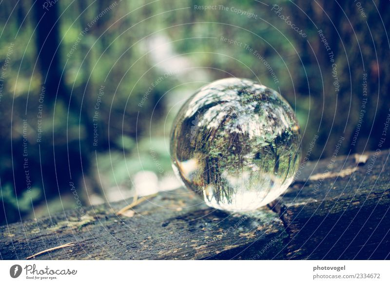 forest ball Environment Nature Tree Forest Natural Round Contentment Acceptance Trust Safety Responsibility Attentive Serene Patient Calm Sphere Glass ball