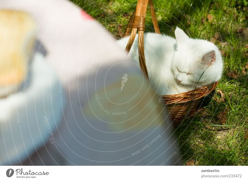 Mimi Harmonious Well-being Contentment Relaxation Calm Leisure and hobbies Living or residing Animal Pet Cat 1 Sleep Sit Cute Domestic cat Basket Colour photo