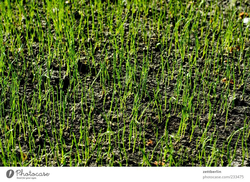Nature Plant Meadow Emotions Grass Spring Climate Growth Blossoming Optimism Foliage plant Spring fever Sprout Grass green Grass tip