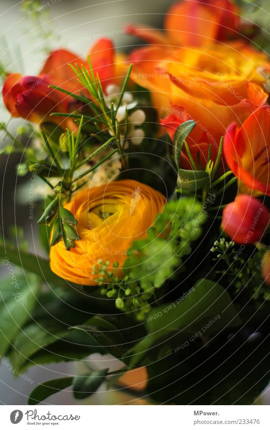 soon is mother's day... Plant Rose Leaf Blossom Multicoloured Green Bouquet Orange Flower Colour photo Interior shot Close-up Detail Blur Deserted