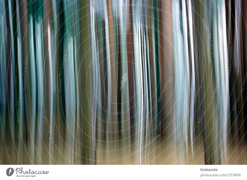 strip forest Style Design Line Stripe To fall Movement Speed Dream Play of colours Color gradient Vertical Background picture Abstract Change Colour photo