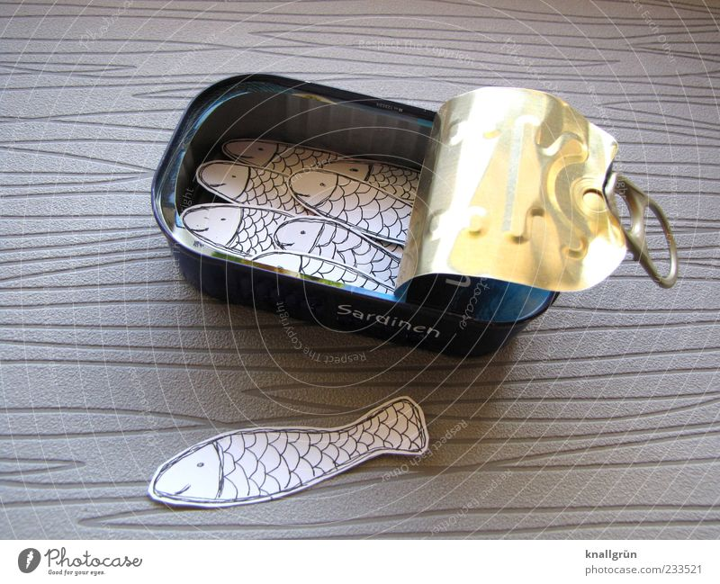 Animal Nutrition Gray Metal Gold Open Glittering Lie Exceptional Fish Fish Group of animals Silver Packaging Tin False
