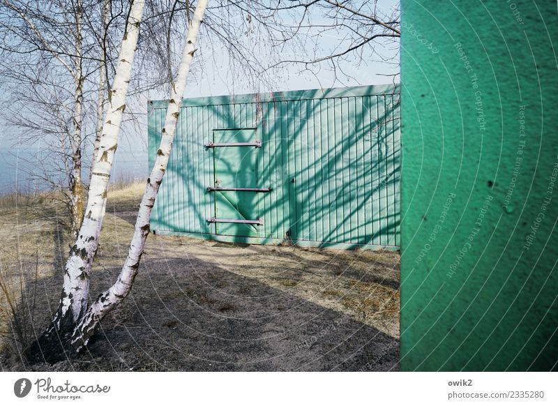 Green barrel Environment Nature Landscape Winter Beautiful weather Birch tree Birch bark Twigs and branches Container Tin Illuminate Turquoise Bright Colours
