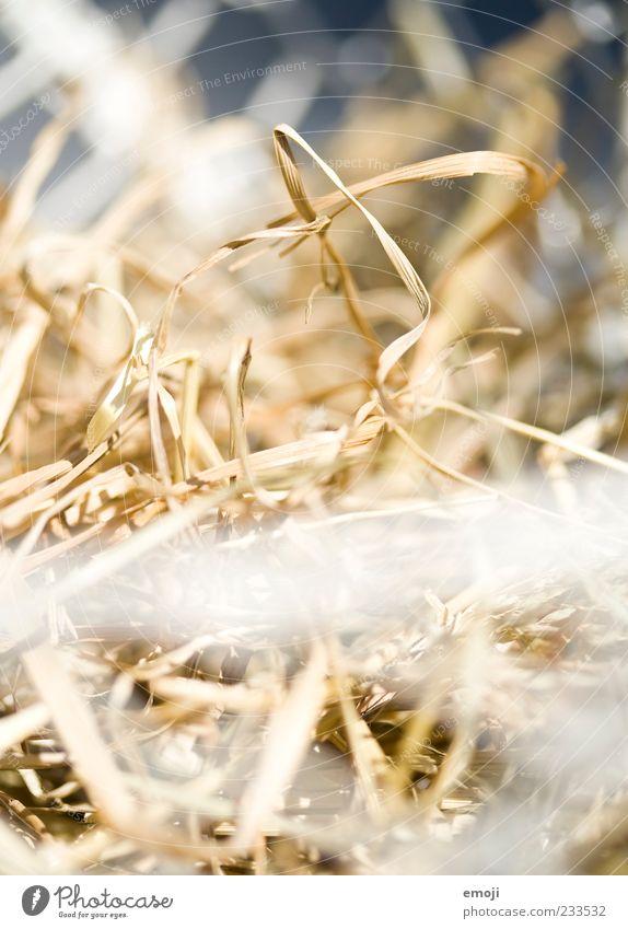Dry Straw Nest Sunlight