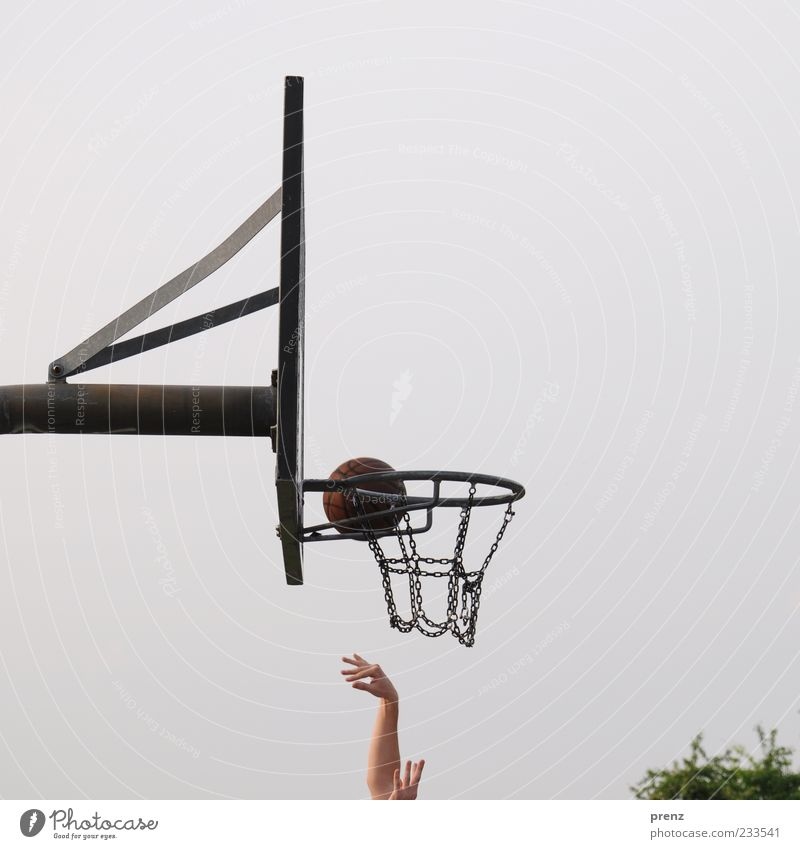 streetball Joy Playing Ball sports Sportsperson Arm Hand Fingers 1 Human being Sky Tree Park Metal Throw Gray Green Chain Steel carrier Strike Aim Basketball