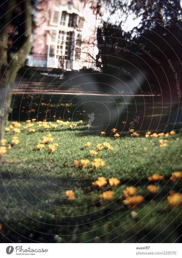 Playboy Mansion Villa Garden Lawn Flower Deserted Light (Natural Phenomenon) Old building Blur Stairs Sunlight Tree trunk Twigs and branches Copy Space bottom