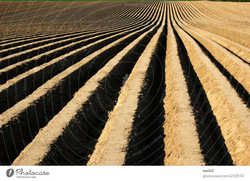 asparagus lines Work and employment Agriculture Forestry Vegetable bed Vegetable farming Environment Nature Landscape Earth Field Simple Infinity Long Natural