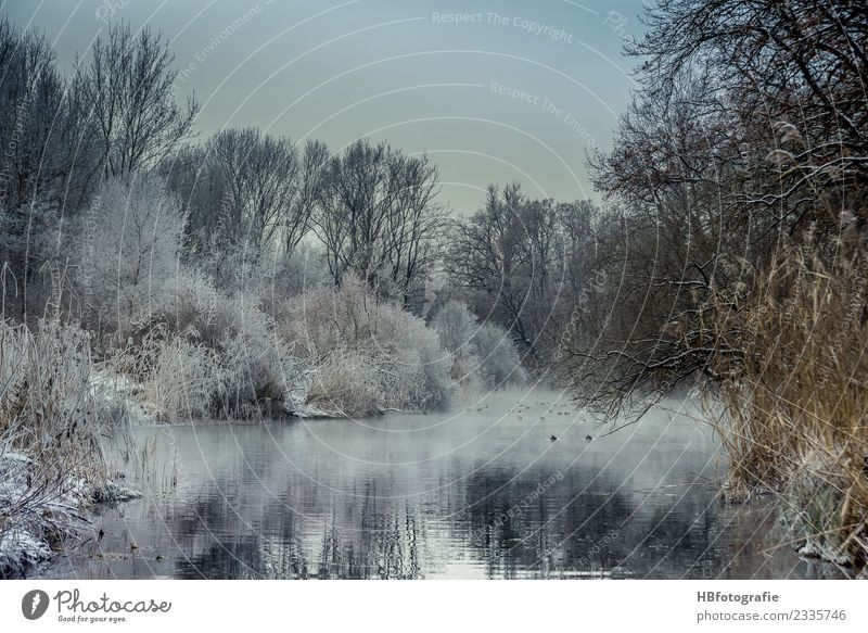 Winter wonderland Environment Nature Landscape Plant Water Ice Frost Snow Snowfall Forest Bog Marsh Pond Lake Brook River Cold White Moody Climate Winter mood