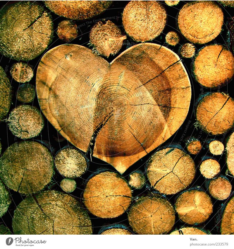 Nature Beautiful Tree Yellow Emotions Wood Happy Brown Heart Round Tree trunk Crack & Rip & Tear Stack Beige Firewood Stack of wood