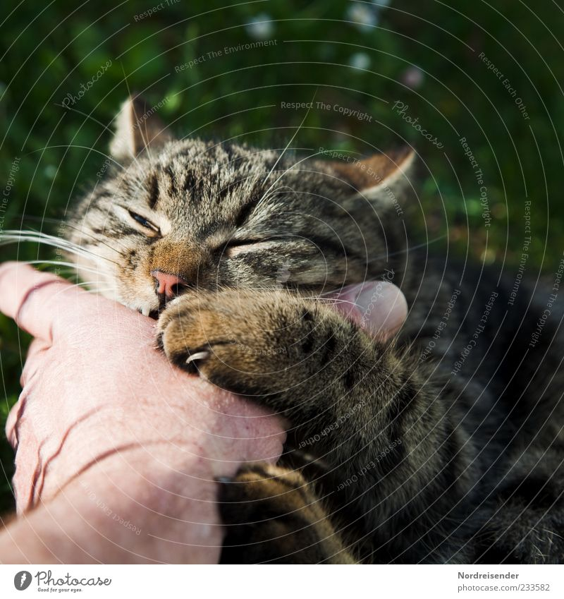 Cat Hand Summer Joy Animal Meadow Playing Spring Fingers Crazy Pelt Contact To enjoy Joie de vivre (Vitality) Testing & Control Fight