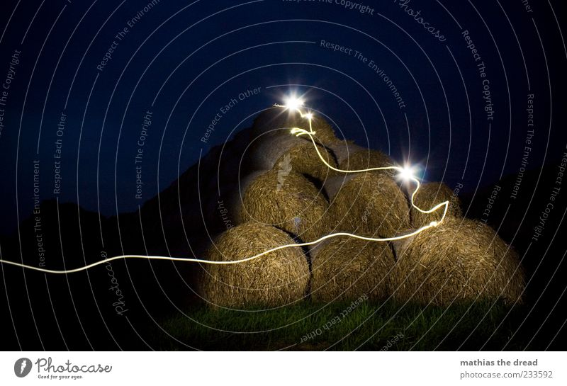 NOCTURNAL BUSTLE Environment Nature Landscape Plant Night sky Horizon Beautiful weather Grass Bushes Agricultural crop Meadow Field Esthetic Exceptional Dark