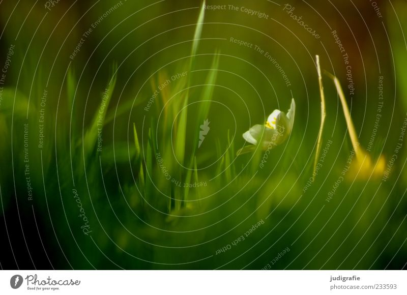 Nature Green Plant Environment Meadow Grass Blossom Spring Moody Natural Growth Illuminate Transience Delicate Fragrance Blade of grass