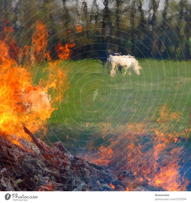 Green Red Animal Meadow Grass Warmth Fire Hot Pasture Burn Flame To feed Farm animal Fireplace Plant Hazy
