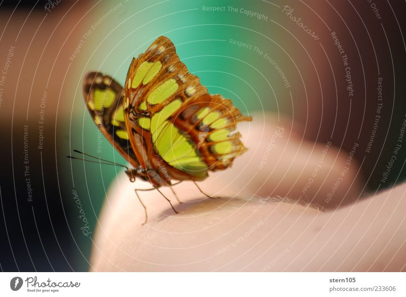 Nature Summer Calm Environment Happy Contentment Arm Sit Wild animal Wing Romance Curiosity Peace Serene Butterfly Botany
