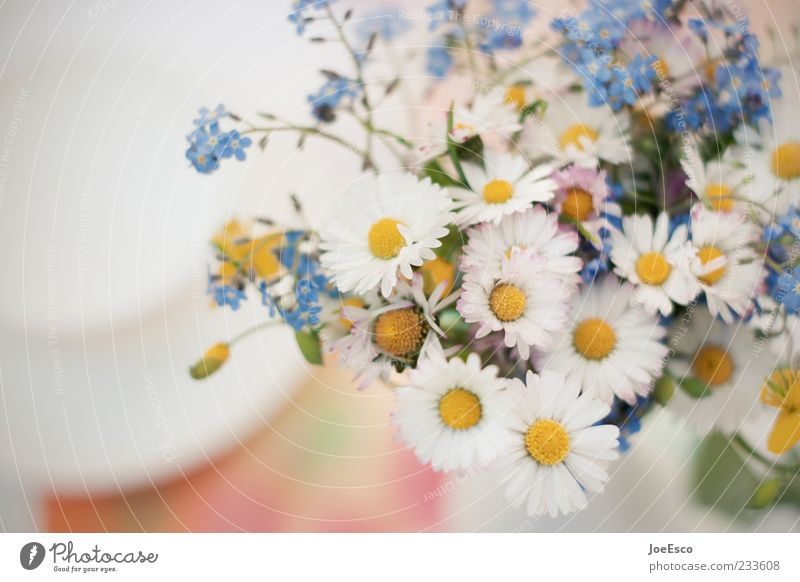 Beautiful Plant Summer Flower Emotions Natural Gift Decoration Lifestyle Delicate Bouquet Daisy Self-made Mother's Day Meadow flower Blur