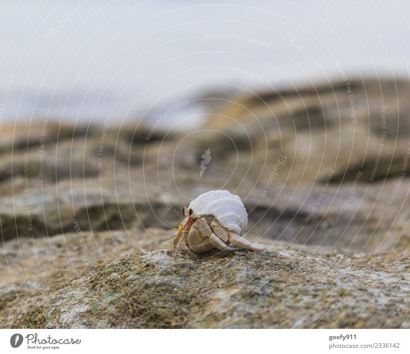 Hermit crab II Vacation & Travel Adventure Environment Sand Beautiful weather Rock Coast Beach Bay Ocean Animal Wild animal Mussel Animal face Animal tracks
