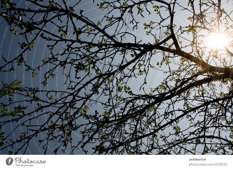 Sky Plant Blossom Spring Climate Growth Beautiful weather Blossoming Bud Climate change Cloudless sky