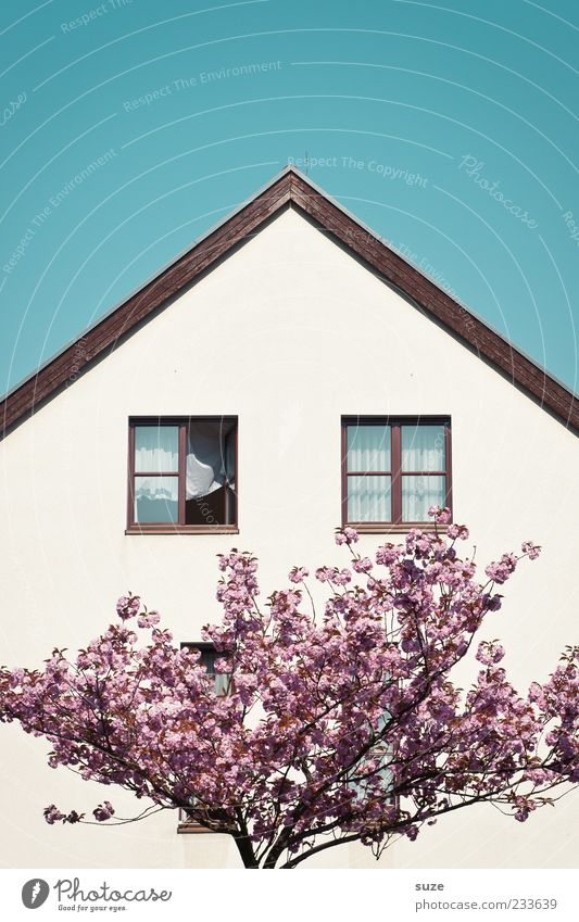 Blue Beautiful White Tree House (Residential Structure) Window Spring Blossom Pink Facade Open Living or residing Growth Beautiful weather Roof Branch