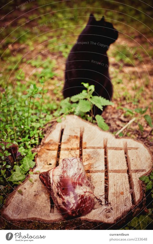 Cat Green Black Wood Meat Carnivore Tree stump Refuse Cat's head Cat's ears