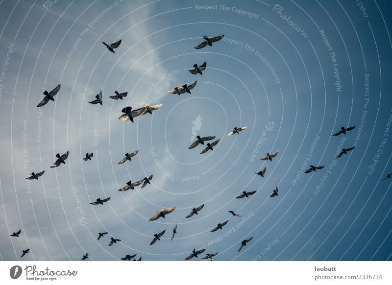 Birds flying Nature Animal Sky Sky only Climate change Weather Wild animal Pigeon Wing Group of animals Flock Adventure Movement Freedom Peace Horizon