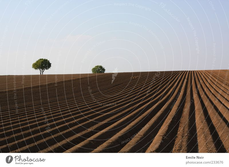 World of clear colours Landscape Earth Sky Cloudless sky Drought Tree Field Line Colour photo Exterior shot Deserted Copy Space top Evening Furrow Agriculture