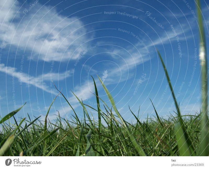 grass Grass Green Clouds Meadow Juicy Sky Blue