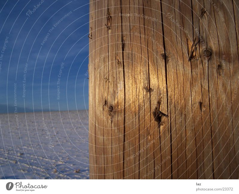 Golden Wood Winter Obscure Sky Tree trunk Electricity pylon Snow