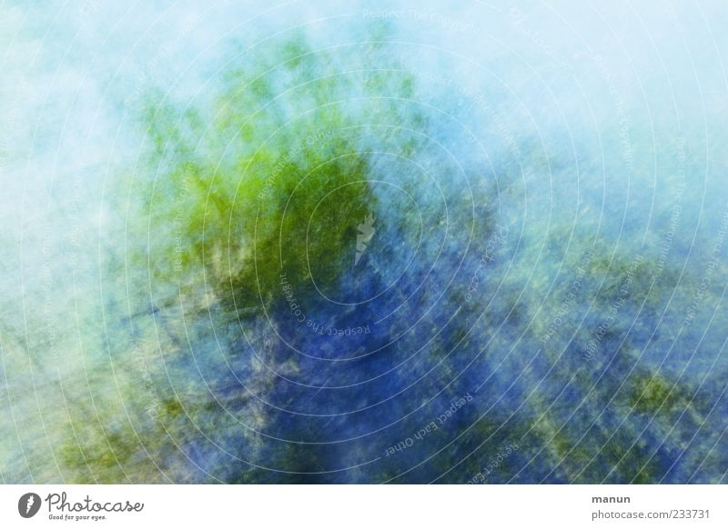 Nature Blue Green Tree Leaf Movement Spring Background picture Exceptional Fantastic Abstract Bizarre Treetop Surrealism Copy Space Twigs and branches