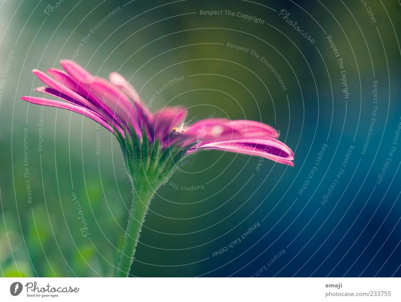 colourflash Nature Plant Flower Blossom Beautiful Green Violet Blossom leave Colour photo Multicoloured Exterior shot Close-up Detail Macro (Extreme close-up)