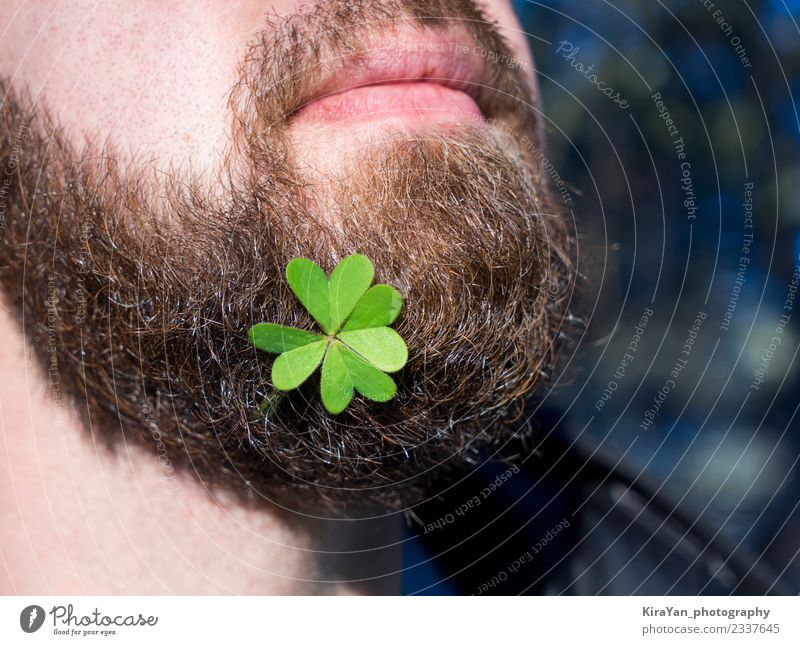 Close up bearded man face with natural green clover leaf Beer Happy Face Decoration Feasts & Celebrations Man Adults Lips Nature Plant Leaf Beard Happiness