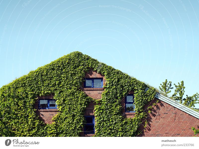 In the rushes Sky Cloudless sky Plant Ivy Deserted House (Residential Structure) Detached house Wall (barrier) Wall (building) Facade Window Roof Stone Blue