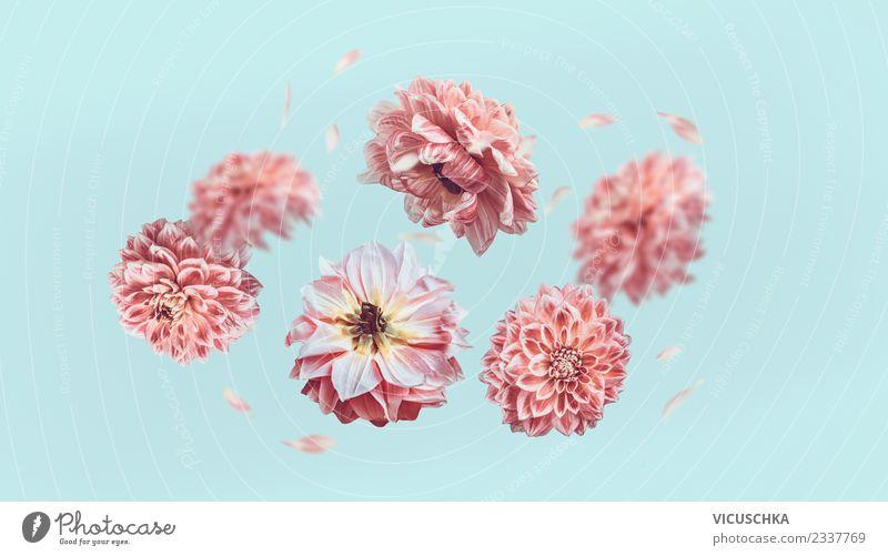 Nature Plant Blue Summer Flower Leaf Blossom Love Style Feasts & Celebrations Pink Flying Design Creativity Sign Rose