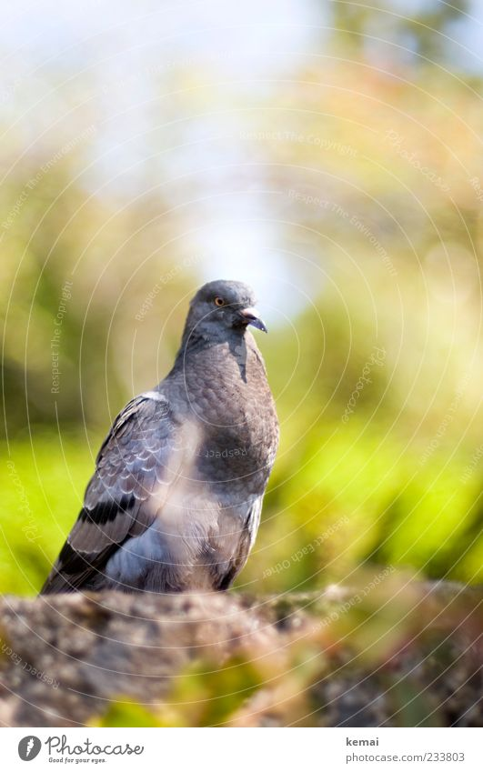 city pirate Environment Nature Animal Sunlight Plant Wild animal Pigeon Animal face Head 1 Wall (barrier) Looking Sit Gray Green Calm Colour photo Exterior shot