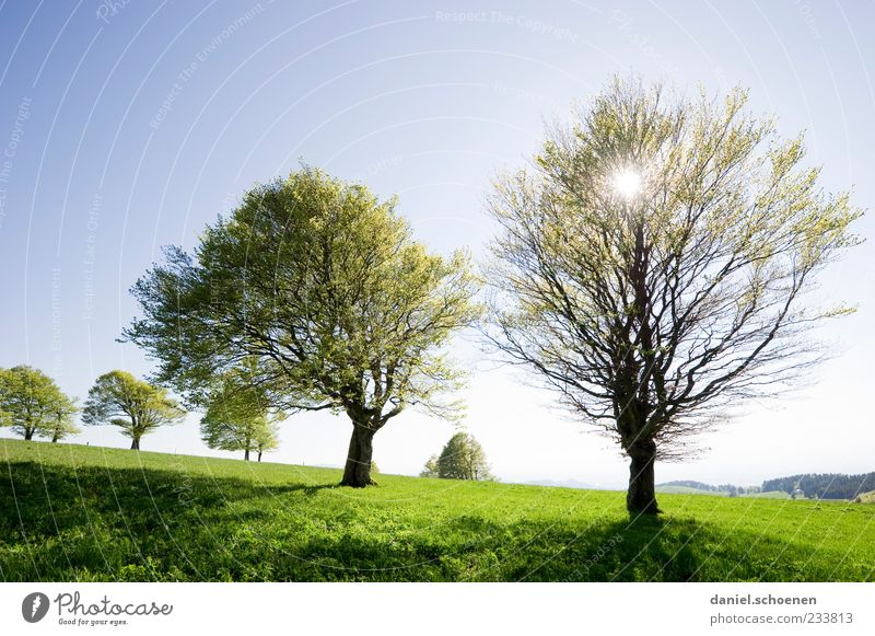 Nature Blue Green Tree Vacation & Travel Sun Summer Environment Meadow Landscape Spring Weather Trip Climate Tourism Hill