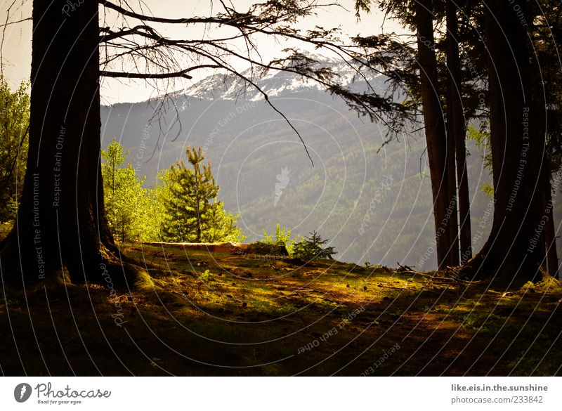Nature Tree Plant Summer Loneliness Calm Forest Far-off places Relaxation Landscape Mountain Freedom Contentment Bushes Alps Beautiful weather
