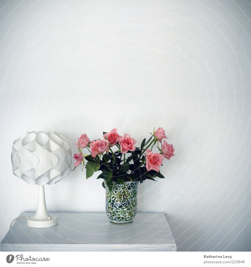 finally cleaned up again Living or residing Flat (apartment) Arrange Decoration Furniture Lamp Wallpaper Living room Bedroom Vase Green Pink White Esthetic