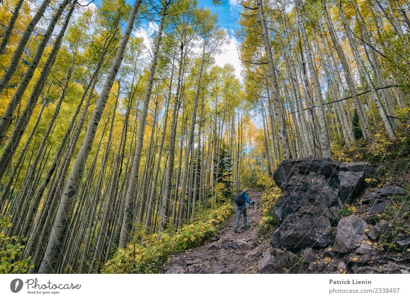 Aspen forest in autumn Wellness Harmonious Well-being Contentment Senses Calm Meditation Vacation & Travel Tourism Trip Adventure Far-off places Freedom