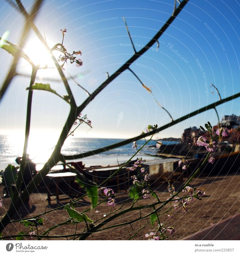 Sky Beautiful Vacation & Travel Plant Sun Ocean Beach Far-off places Freedom Blossom Coast Horizon Romance Idyll Longing Beautiful weather
