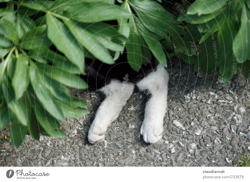 In camouflage dress Nature Plant Animal Leaf Peony Pet Cat Paw 1 Relaxation Lie Indifferent Hide Camouflage Paving tiles Legs Funny Comical Colour photo